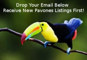 Sign up for new Pavones Listings